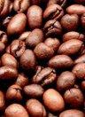 Grains de café Caracoli