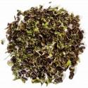 Thé vert à la menthe - Greender's Tea